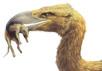 """Так художник представляет себе новою разновидность форусракидов или """"ужасной птицы"""". Иллюстрация - Stephanie Abramowicz. С сайта National Geographic News"""