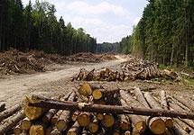 Вырубка  Химкинского леса. Фото Ecmo.Ru