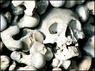 """По современным данным, бубонная чума (""""Черная Смерть"""") тогда выкосила около трети всего населения Европы. Иллюстрация с сайта BBC News"""