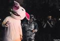 Свиньи в лагере на Чистых прудах. Фото В.Максимюк/Грани.Ру