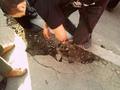 Страшные разрушения асфальта Болотной 6 мая. Фото из блога Татьяны Болотиной